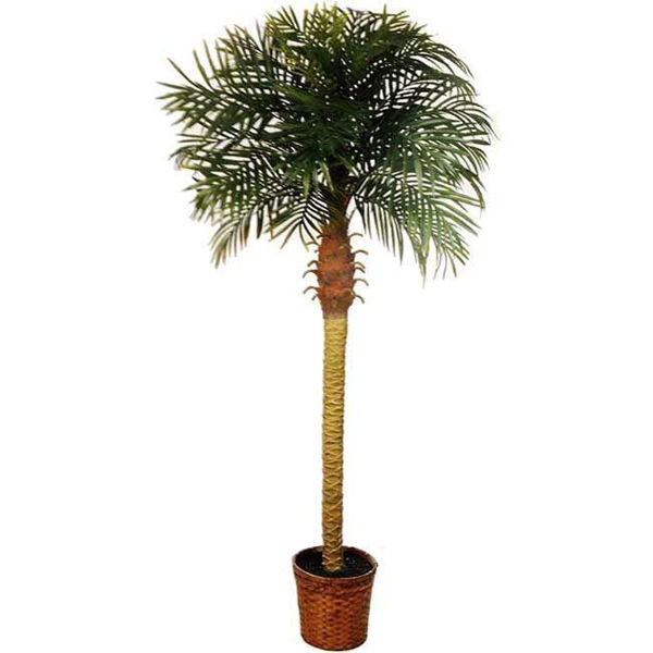 Picture of Phoenix 6' Potted Palm Tree