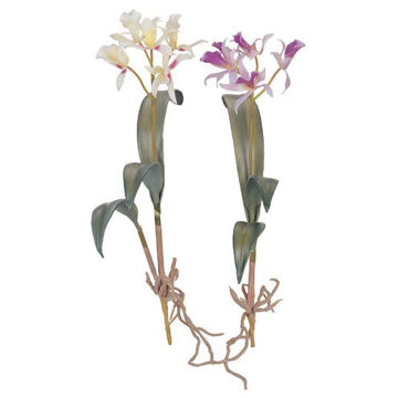 "Picture of Wild Cattleya 17"" Orchid"
