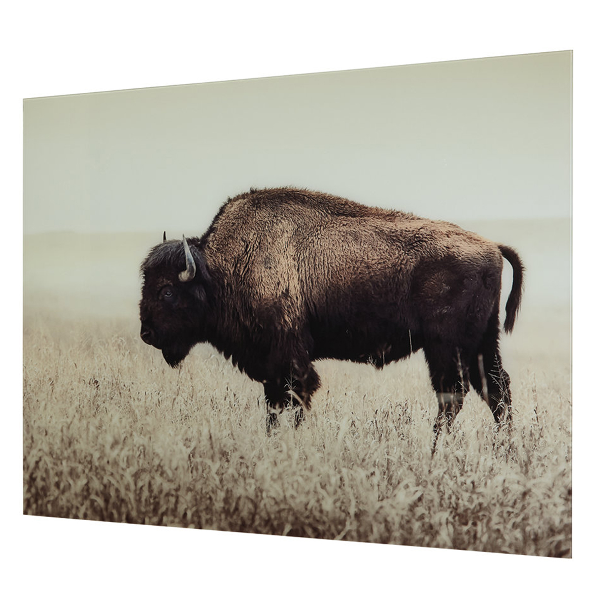 Picture of BRUTUS BUFFALO WALL ART